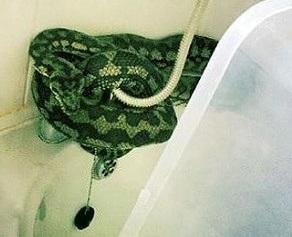 a snake in the bath, gambar untuk contoh anecdote text dan penjelasannya
